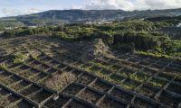 """Governo dos Açores quer reconverter vinhas para ter """"vinhos de maior qualidade"""""""